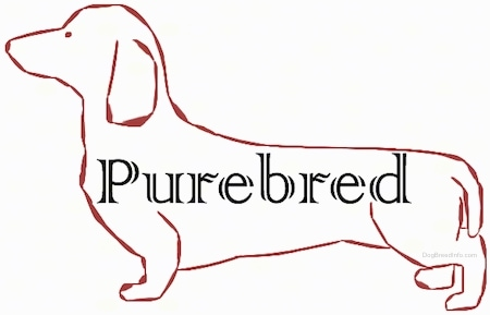 A image of a drawn dog with the words Purebred in it.