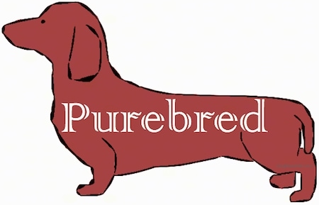 A drawing of a weiner dog with the word 'Purebred' over top of it