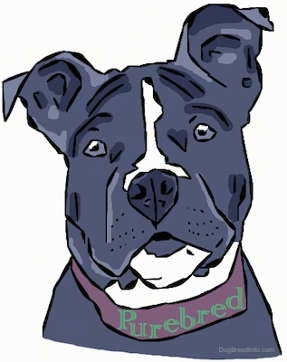 A Drawn Picture of Bia the American Bully. The word Purebred is around her collar