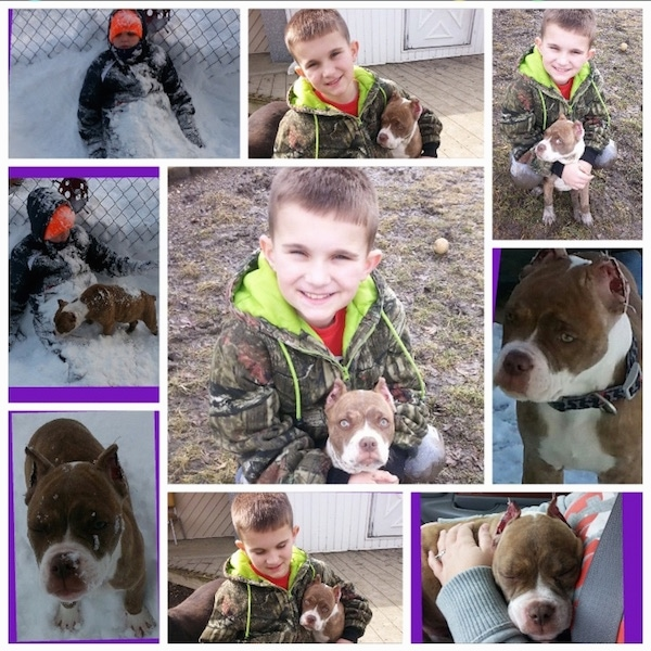 A Compilation of images showing a boy and a Red-Tiger Bulldog puppy.