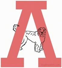 The letter A with an Afgan Hound as the center line