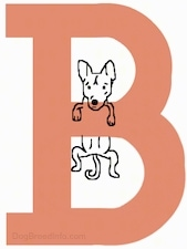 Drawing of a letter B with a Basenji dog hanging off the middle