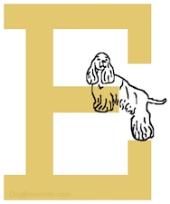 There is a big yellow letter of an E and there is a picture of a drawn English Cocker dog climbing on it