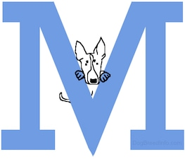 A drawn Mini Bull Terrier dog is standing  up in the middle part of the capital letter M