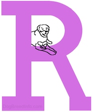 A drawn dog is laying in the empty middle part of a drawn capital letter R
