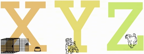 The capital letters X, Y and Z. There is a dog crate and food bowl in front of the letter X and two different dogs are standing at the base of both letters Y and Z.