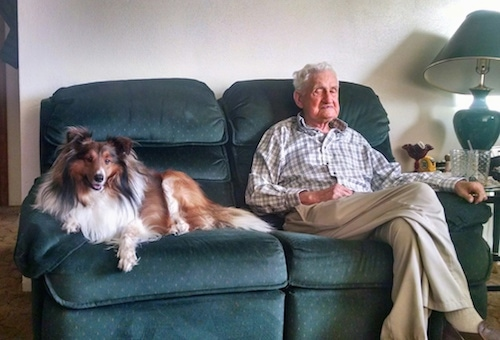 A brown and white with black Shetland Sheepdog is laying on a couch next to a gray haired man who is sitting with his legs crossed.