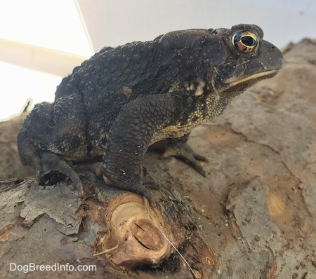 Close Up - Toad sitting on a log