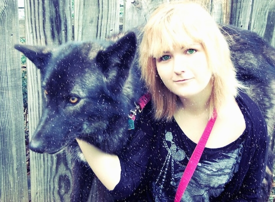A black and brown Wolfdog with golden brown eyes is standing in front of a fence and a blond haired lady with green eyes is in front of him with her hand on its head.