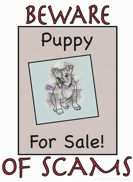A drawn sign that says 'Beware of Scams'. Inside of a tan rectangle area in the middle are the words 'Puppy For Sale' and a puppy with a wind-up knob on the back of it symbolizing the puppy is not real.
