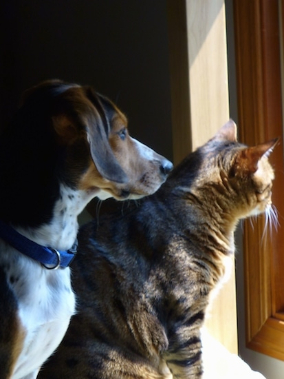 A dog and a cat side-by-side looking out a window