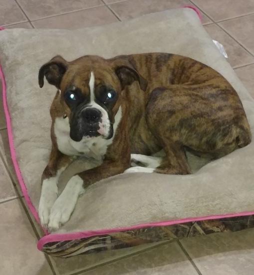 Boxer Dog Kennel Names