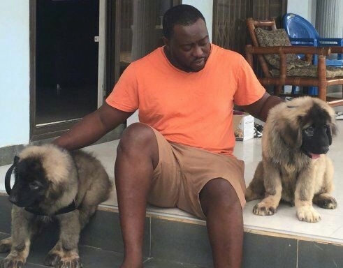 Kane and Abel the Caucasian Shepherd puppies are sitting on each side of a man on a back porch