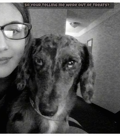A black and white photo of a silver dapple Dachshund is in the arms of a lady who is smiling and wearing glasses. The words 'So your teling me were out of treats?' is overlayed at the top of the image.