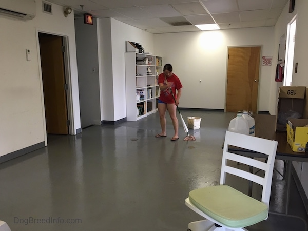 girl in all red is mopping the floors at the Dog Breed Info Center(R)'s office.