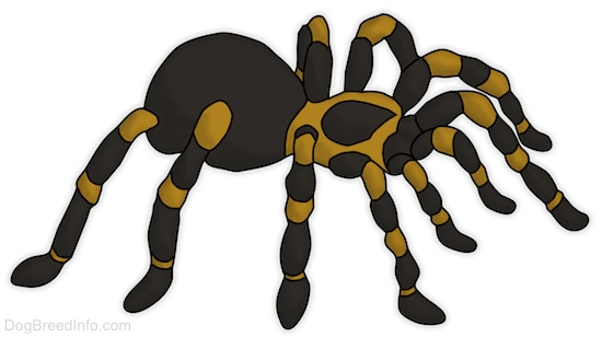 A drawling of a tarantula.