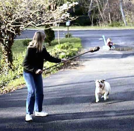 Spike the Bulldog is outside running after a broom being held in the air by a person in a green sweater. There is a little girl riding a tricycle in the background
