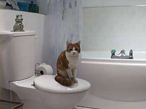 Joey the Cat is sitting on a closed toilet seat with a bath tub in the background