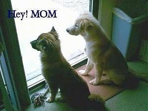 A tan dog and A brown dog are sitting next to each other in front of a sliding door. The Words - Hey! Mom - is overlayed