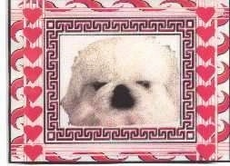 Close up head shot - A white Pekingese puppy. There is a photo frame with hearts around it.