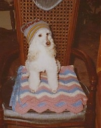 Celia the Poodle wearing a hat sitting on a blanket on a chair