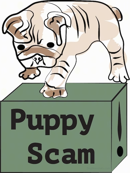 A drawling of a little Bulldog puppy standing on top of a green box that has the words 'Puppy Scam' written on the front of the box.