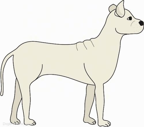 A drawling of a tan dog with a long skinny tail, perk ears, a black nose, dark eyes and extra skin on its back facing the right.