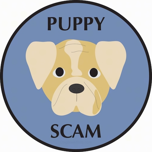 A drawling of the face of a Bulldog puppy with a brown face and tan ears, a black nose and black eyes inside of a blue circle that says 'Puppy Scam'