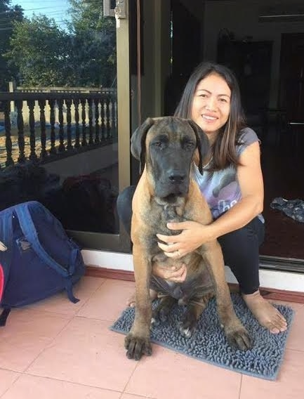 A huge tan with black puppy that has a dark face and tan body sitting down in front of a sliding glass door with a smiling lady kneeling behind him. The dog has a very large black  nose, a long thick muzzle, huge paws and a lot of extra skin.