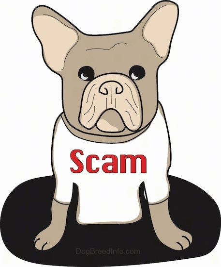 A drawn image of a brown with tan perk eared, pushed back faced French Bulldog puppy sitting on a black oval wearing a white shirt that says 'Scam' on it.