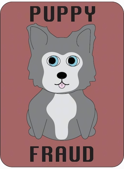 A drawn image of a little siberian husky puppy with blue eyes sitting down with its little pink tongue showing. The words Puppy Fraud are written on the image.