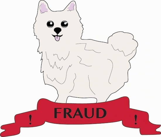 A drawn fluffy white Pomeranian puppy standing on a red banner that says Fraud on it.-