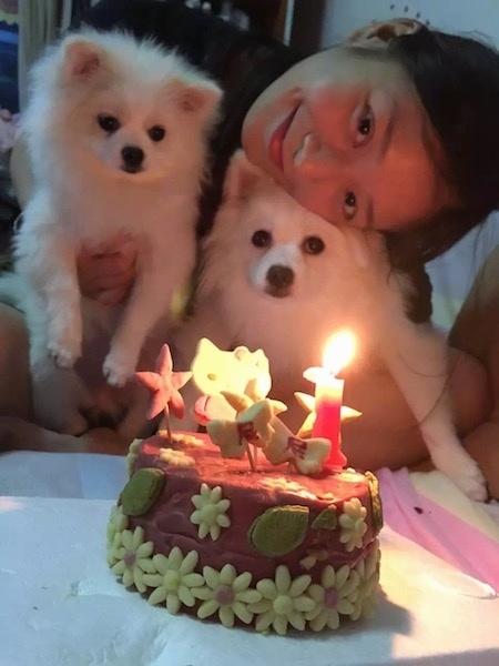 A lady with dark hair holding two small fluffy white dogs in front of a hello kitty birthday cake that has a lit candle. She has her head on top of the dog in her right arm.