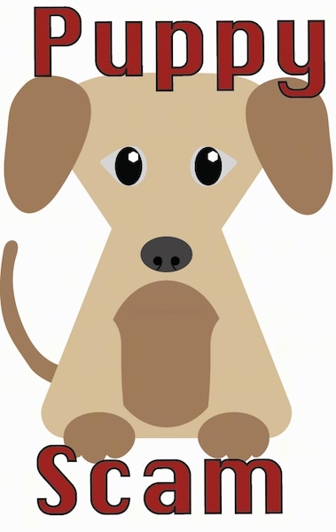 A drawn image of a tan and brown puppy with the words Puppy Scam written in red letters.