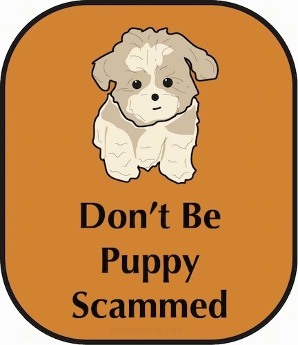 A drawling of a cute little tan Shih Tzu puppy sitting down with the words Dont Be Puppy Scammed under it. The puppy is placed on a rust brown background.
