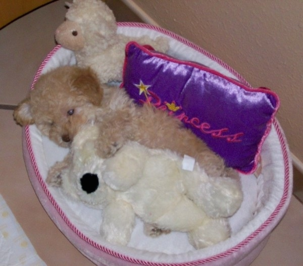 A small fluffy little tan puppy laying down in a dog bed with two stuffed animals and a shiny purple and pink pillow that says Princess on it.