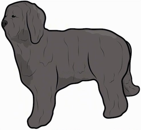 Side view of a drawing of a large breed, gray thick, long coated dog with long ears that hang down to the sides and a black nose.