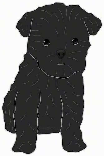 Front view drawing of a small black dog with black round eyes, a black nose and thick hairs around its head looking like an ewok.