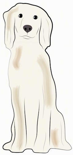A drawing of a tall tan dog with long soft ears and thick fur, a black nose and dark eyes sitting down.