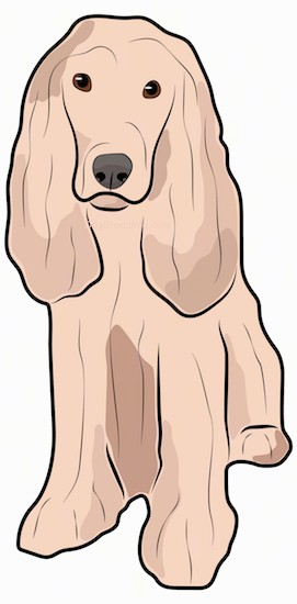 Side view of a drawing of a cream colored dog with a very thick long coat that touches the ground, a short muzzle with a black nose and long thick ears that hang down to the sides with long hair hanging from them.
