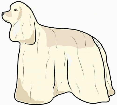 Front view of a drawing of a tan dog with a long coat, very long ears that hang down to teh sides, a long muzzle with a black nose and dark eyes sitting down.