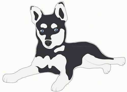 A drawing of a black and gray artic, husky type looking small dog with blue eyes and perk ears laying down.