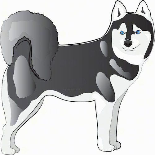 A drawing of a gray and white artic looking dog that looks like a husky. It has a very thick coat, a black nose, blue eyes, small perk ears and a tail that curls up over its back with thick fur on it.