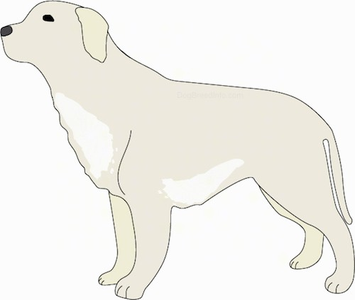 Side view of a drawing of a milky white dog with lighter patches of white on its chest and belly with ears that hang down to the sides, dark almond shaped eyes and a black nose. Its tail is hanging down low.
