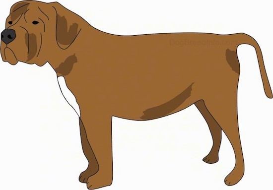 A drawing of a thick stocky mastiff looking dog with a long tail, a square snout, a big black nose, wrinkles on its head, thick ears that hang down to the sides and dark eyes with a little bit of white on its chest.