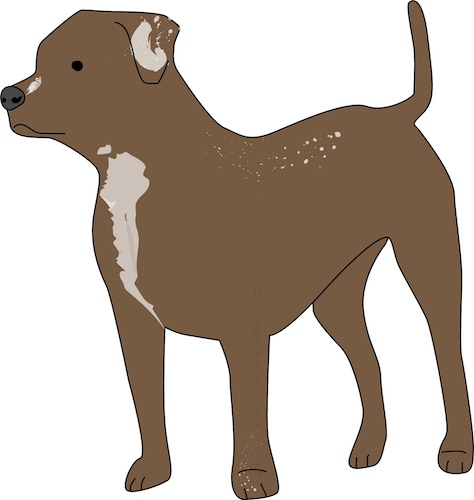 Front side view of a drawing of a brown thick muscled dog with a long tail, ears that hang down to the sides, a black nose, dark eyes with tan on his chest and spots of tan on his back.