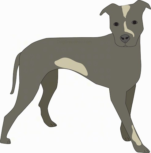 Side view of a drawing of a gray dog with tan patches, a long tail that is hanging down, dark eyes, a nose that matches its coat color and ears that stand down and out to the sides.