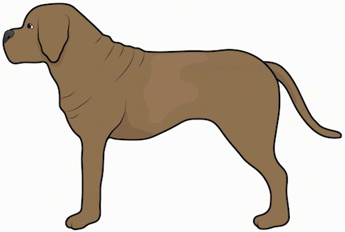 Side view drawing of a brown large breed dog with a lot of extra skin and wrinkles, a large head, a big black nose and a boxy muzzle with a long tail standing.