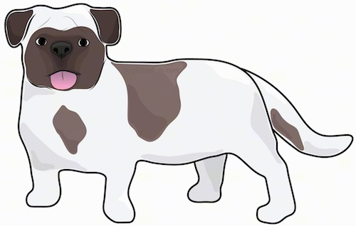 A drawing of a small short legged white and brown dog with ears that hang down to the side a big head, round eyes and a thick body and long tail.