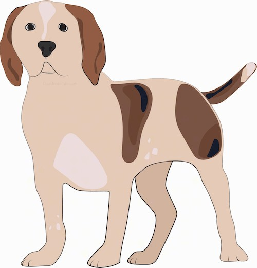 A drawing of a tan, brown, darker brown and black with white dog standing. The dog has a wide chest and ears that hang down to the sides like a hound dog. The tail is long and held low. It looks like a cross between a hound dog and a mastiff. The eyes and nose are black.